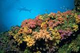 Mikronesien - Palau - Rifftauchen