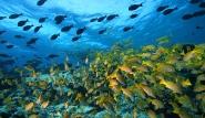 Malediven - MY Amba, Unterwasserwelt © Josef Hochreiter