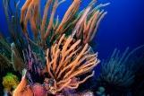 Bonaire - Unterwasserwelt, © Buddy Dive Resort
