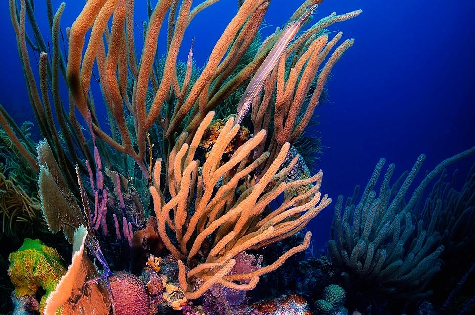 Bonaire -  Unterwasserwelt © Buddy Dive Resort