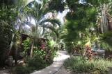 Bonaire -Tropical Inn