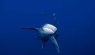 Tauchsafaris - Unterwasserwelt by Deep Blue ©