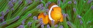 Bohol---Unterwasser-©-Bernd