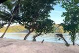 Lembeh - White Sands Beach Resort, Strand