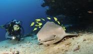 Malediven - MY Amba, Unterwasserwelt ©Josef Hochreiter