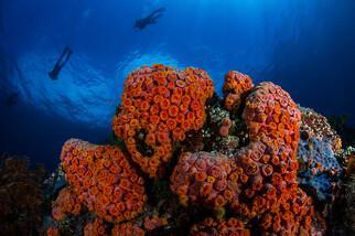 Lembeh  Resort Unterwasserimpressionen