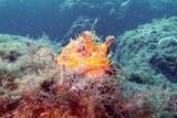 Unterwasserwelt  Sardinien ©  ORCA Dive Club
