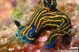 Azoren - Unterwasserwelt 5