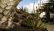 Fuerteventura Nord - Bristol Playa, Garten