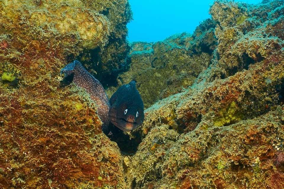 Fuerteventura - Tauchbasis Stefan Heidler, Tauchen