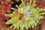 Madeira -  Unterwasser © Manta Diving