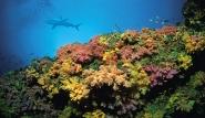 Palau, Riff