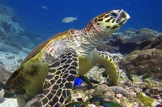 Mirbat Unterwasserimpressionen ©  Extra Divers, CMara