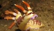 Ost-Timor -  Unterwasserwelt