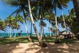 Nicaragua - Little Corn Island - Beach and Bungalow - Palmen