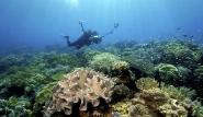 Indonesien - Wakatobi, Unterwasserwelt