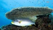 Lombok - Riff