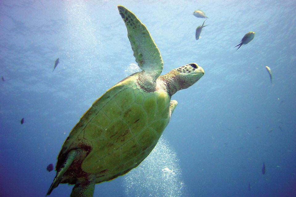Tansania - Schildkröte