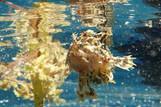 Sali Bay, Unterwasserwelt © Marion Peter