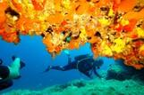 Mallorca - Dive Center Mallorca, Tauchgang