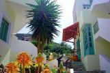 Kreta - Elia Studios