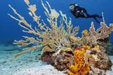 Tobago - Unterwasserwelt © Norbert Probst