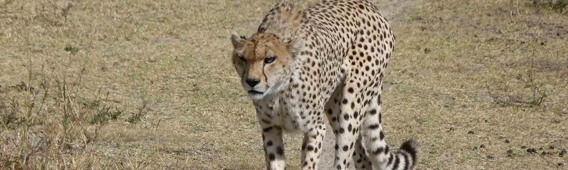 © Africa Safari Experts