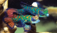 Mikronesien - Unterwasserwelt
