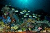Indonesien Raja Laut Unterwasserwelt