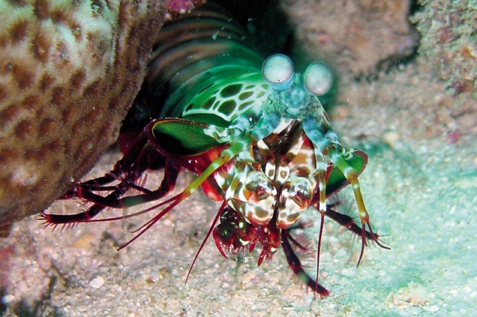 Tansania - Unterwasserwelt