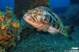 Azoren - Unterwasserwelt